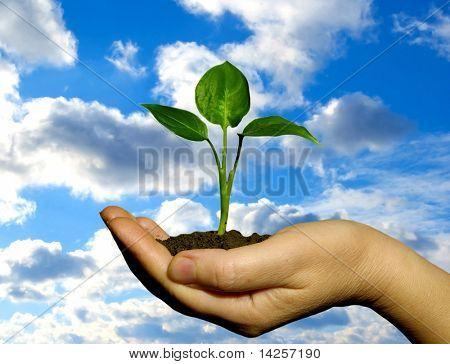 Mão segurando uma planta fresca