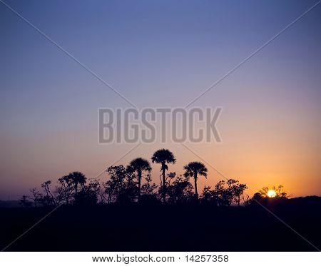 Island of Palm Trees at Sunset
