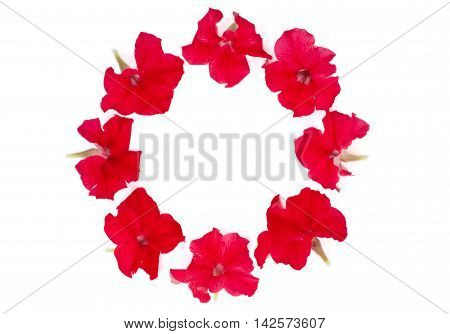 Isolated circle of red petunia on a white background