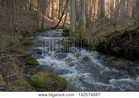 Swift river in the forest. Early spring.