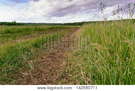 Country road in the field among a green grass. The wet earth in a track and gray clouds in the sky