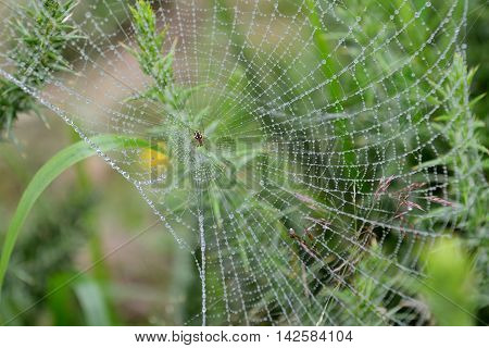 image of a spiderweb photographed close up