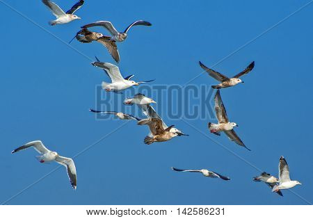 A flock of flying seagulls under the blue sky