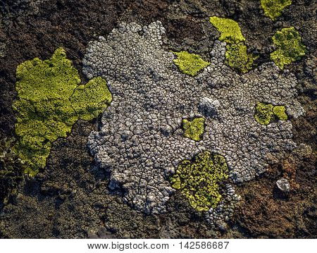 Multi colored spots lichens on rock in top of mountain