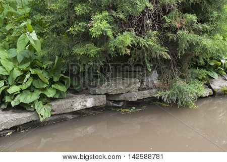 shore of the pond with stone slabs and overhanging the water trees