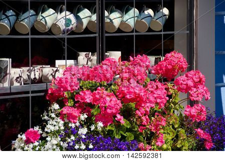 Geraniums And Coffee Mugs In Float Home Village, Victoria