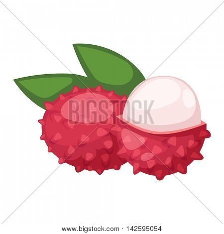 Fresh lychees vector
