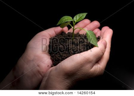 Hands holdings a little green plant