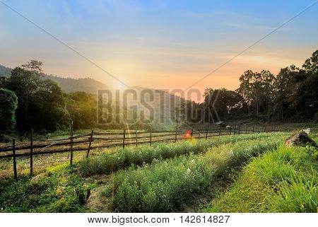 Beautiful sunrise over meadow at doi inthanon Chiangmai Thailand as background