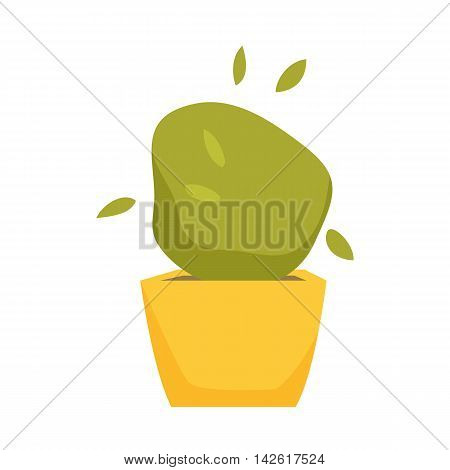 Soleyroliya in pot. Interior home and office potted plant. Houseplant cartoon vector illistration. Interior decoration. Flowerpot drowth and gardening.
