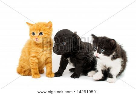 looking  love little kittens on white background