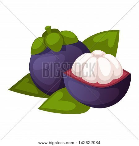 Fresh lychees isolated on white chinese group litchi leaf vector. Refreshing lychee fruit exotic litchi ripe juicy healthy ingredient. Subtropical organic diet lychee fruit seed juice delicious.