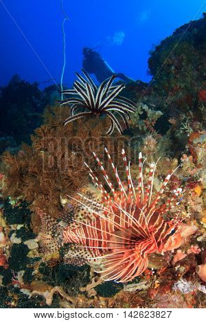 Scuba dive coral reef with lionfish