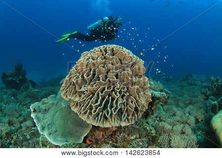 Scuba dive on coral reef