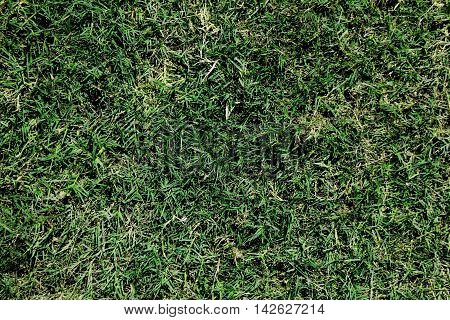 Natural Green Grass Full Of Frame Good For Textures And Backgrounds