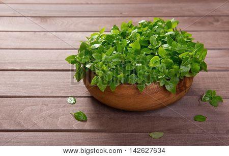 Young Green Fresh Basil