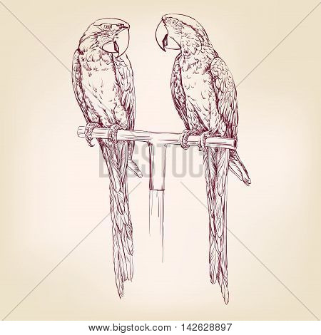 Parrot isolated hand drawn vector llustration realistic sketch