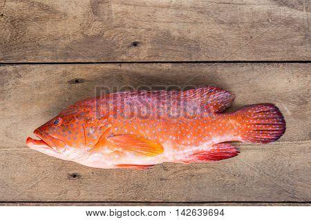Blacktip grouper Red-banded grouper on wood background.