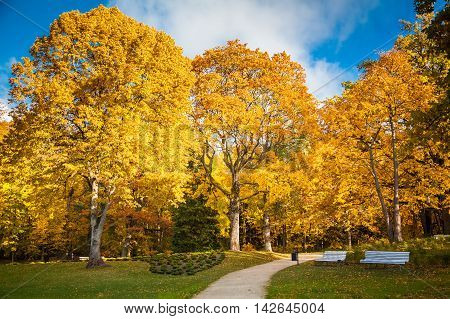 beautiful sunny autumn park with bright yellow trees