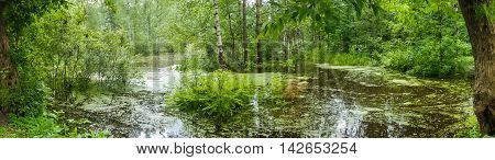 Flooding in the wild forest. Fairy forest flooded with spilled water. The rainy season in nature.