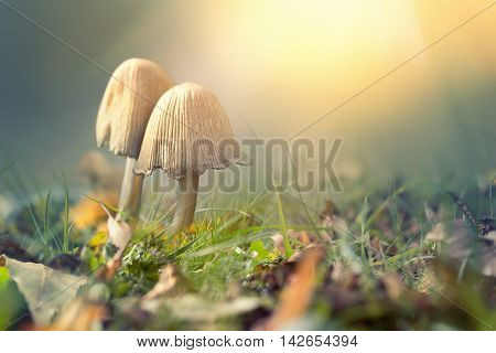 Autumn scene with soft light and mushrooms against blurred background