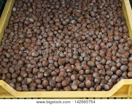 Loose hazelnuts for sale at local farmers market