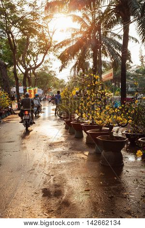 HO CHI MINH CITY VIETNAM - FEBRUARY 06: Holiday trees at the street market during Tet or Lunar New Year celebrations in Ho Chi Minh City Vietnam on February 06 2016.