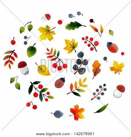 Autumn watercolor elements on a white background