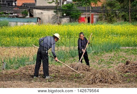 Pengxhou China - April 5 2013: Husband and wife working in a field on their Sichuan province farm