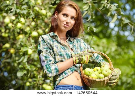 Young smiling attractive woman is standing with full basket of organic apples in a orchard. Country happy lifestyle concept.