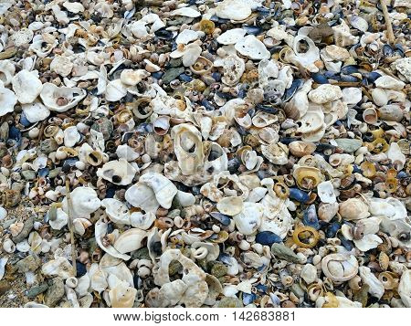 Natural Sand, Mussels Shelss, Oyster Shells And Other Shells Background