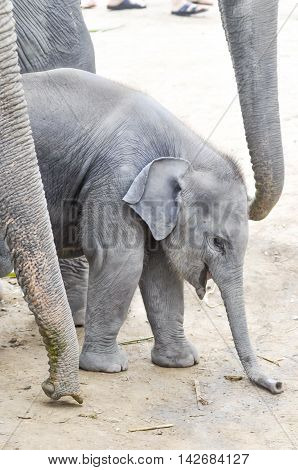 a young gray elephant on the floor