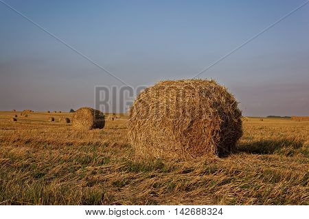 Bales of hay in the fields in summer time harvest
