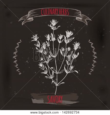 Satureja hortensis aka summer savory vector hand drawn sketch on grunge black background. Culinary herbs collection. Great for cooking, medical, gardening design.