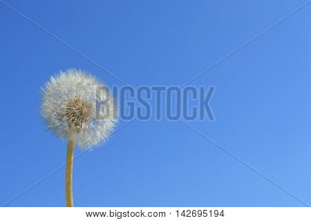 Dandelion with background it's heaven. excellent photos for advertising