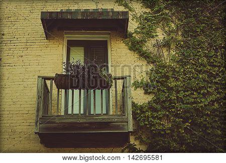Green Ivy Vine Growing On Brock Wall With Window And Balcony