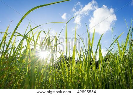 grass field at summer and blue sky background