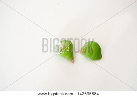 Bright green sea shells on a white background