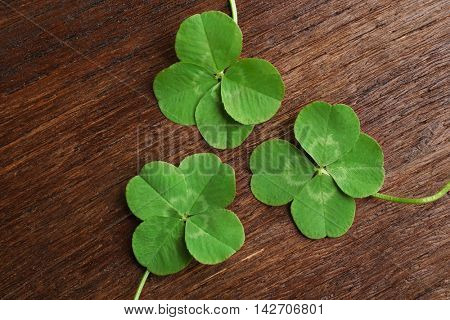 Green four-leaf clovers on wooden background