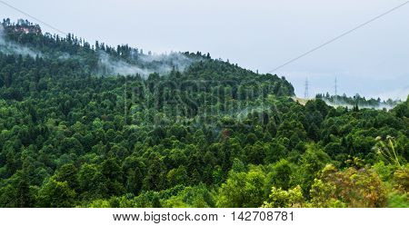 Forested mountain in low lying cloud with the evergreen conifers shrouded in mist in a scenic landscape view