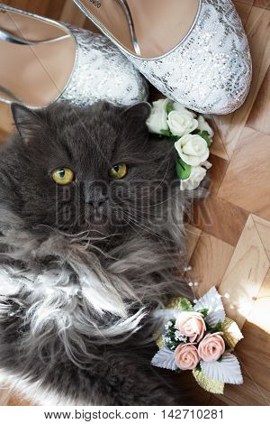 cat wedding shoes and flowers home celebration