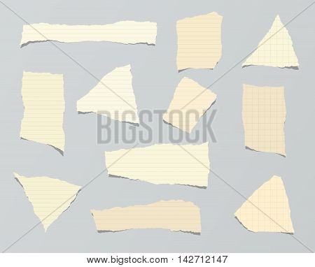 Pieces of ripped brown ruled paper are stuck on gray background.