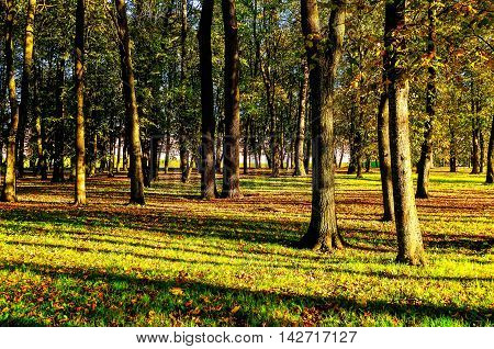 Autumn landscape. Autumn park covered with fallen autumn leaves in bright sunset light- colored autumn landscape in nice sunny autumn weather. Picturesque autumn landscape view