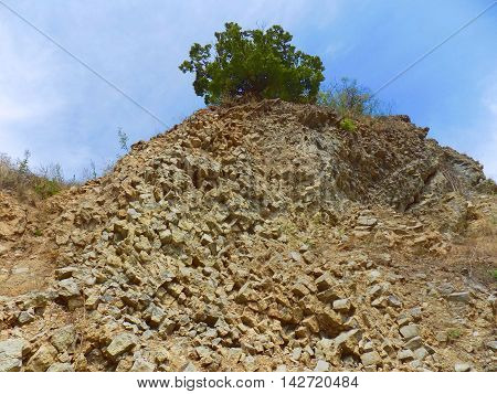 Hill near Stone Pit and deciduous tree