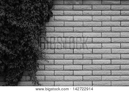 a one new of brick wall background
