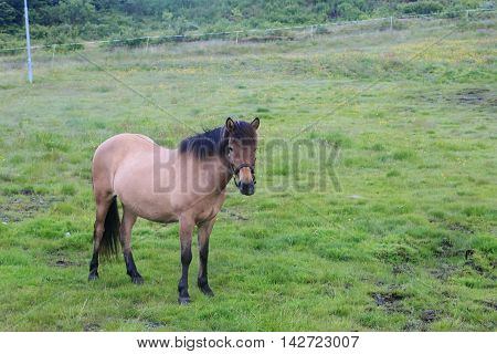 This is rural scene grazing horse on the outskirts of the village in a fenced corral.