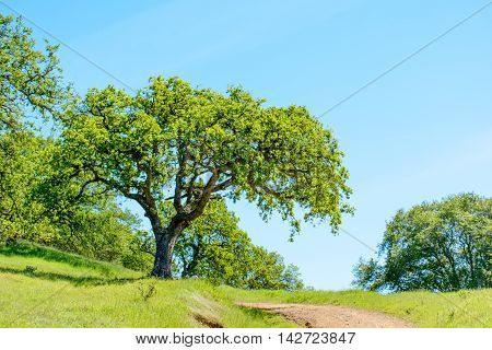 Green Tree And Hiking Trail Under Blue Sky
