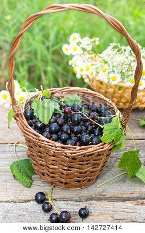 Small basket of black currant outdoor shot