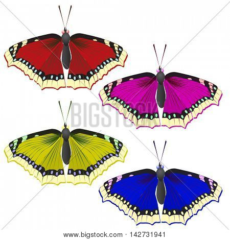 multicolored butterflies. Insects pleased with its appearance and color.