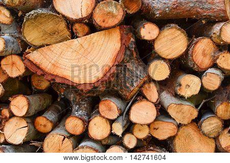 Full frame of firewood side view Mediterranean varieties